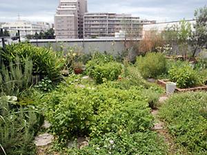 山口多摩平ビルの屋上菜園